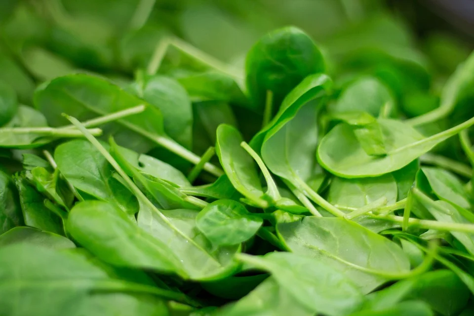 spinach-best Nutritionist in Bhubaneswar